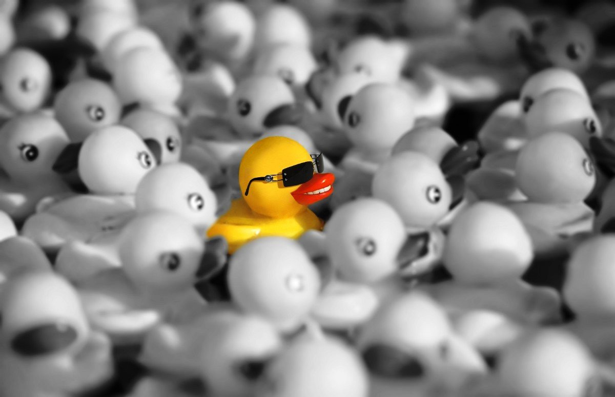 One yellow rubber duck surrounded by colorless ducks